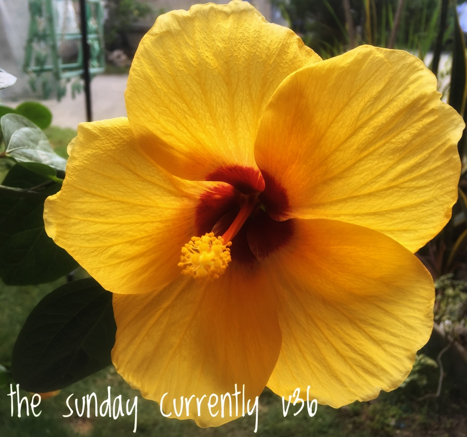 the-sunday-curretly-v36